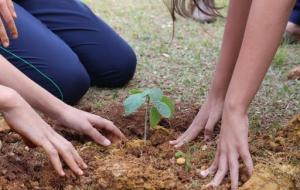 Vereadora indica plantio de árvores em homenagem às vítimas da Covid-19