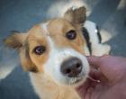 Campanha presencial de adoção de animais retorna neste sábado (25)