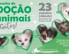 Parque Infantil recebe campanha voltada para a adoção de gatos