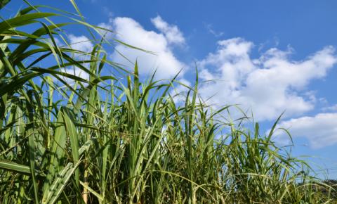Dupla é presa após furtar cana-de-açúcar em fazenda de Trabiju