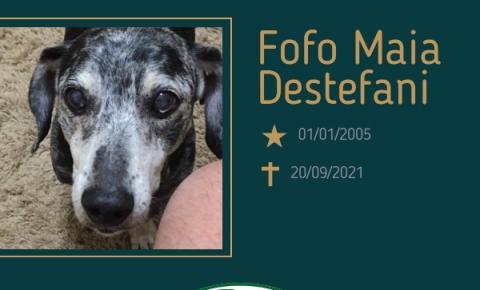 Com pesar, o Grupo Sinsef comunica o falecimento do pet Fofo Maia Destefani